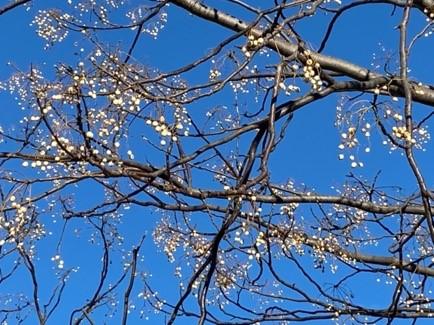 実録「身近な場所で樹木や草花を楽しんでみました」冬編