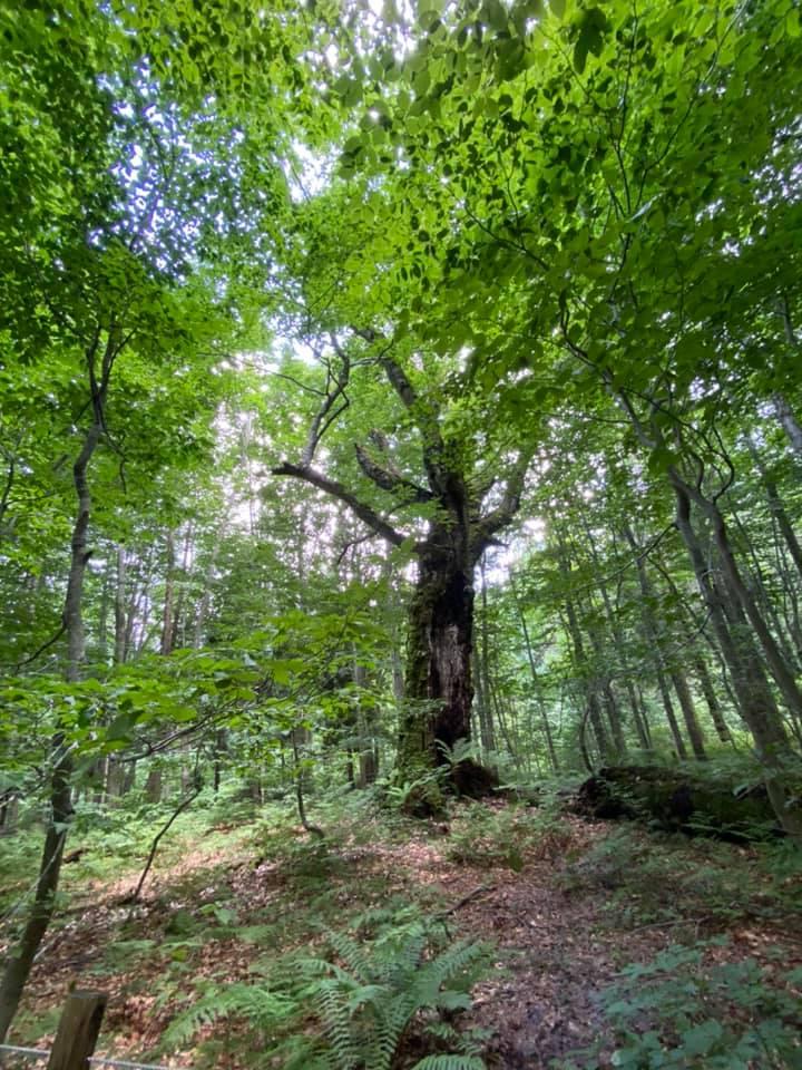 木を見て森を見ず?!発酵のヒント8000年の森