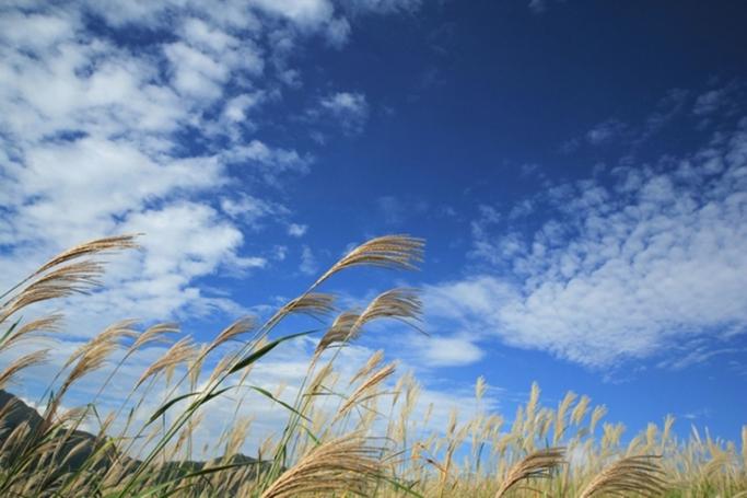 秋の七草と葛