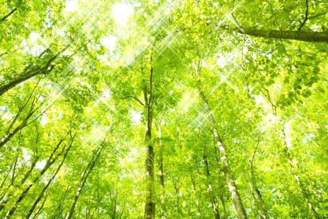 日本の森林 自然と人を繋ぐ香りを求めて 春