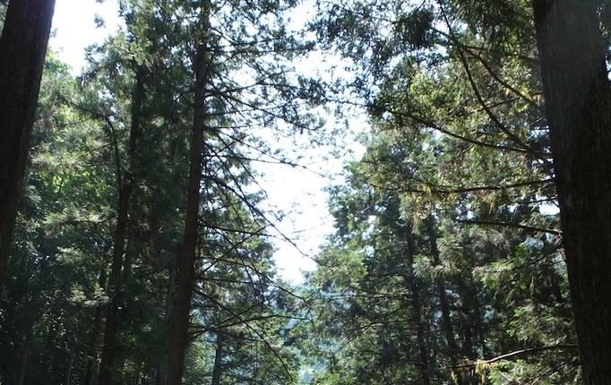 ゆったりと森を歩く時間をとることから始める