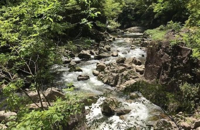 五感を用いた森林の楽しみ方(4〜5月)