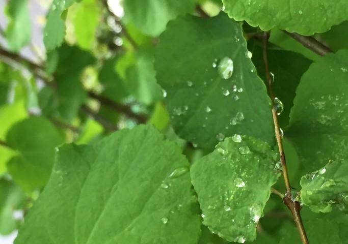 五感を用いた森林の楽しみ方(雨の中編)