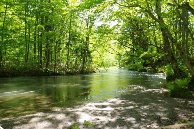 日本の森林 自然と人を繋ぐ香りを求めて 深緑の夏