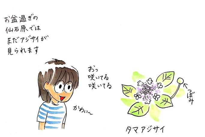真夏に咲く「タマアジサイ(玉紫陽花)」と、ビジターセンターのユニークな展示
