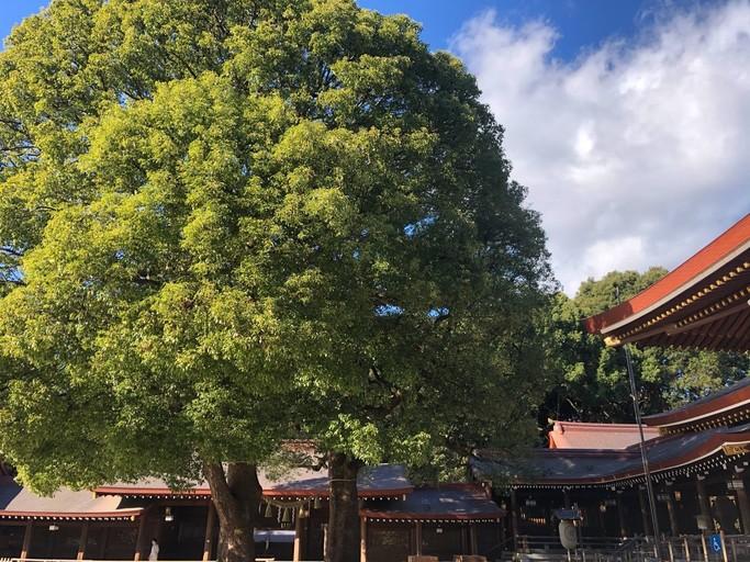 自然に囲まれた寺社でのお祈りは、森林浴とマインドフルネス