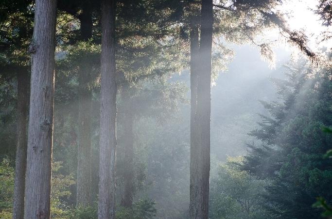 ~お家で楽しむ森林浴①~ ウッド系の香りでリフレッシュ