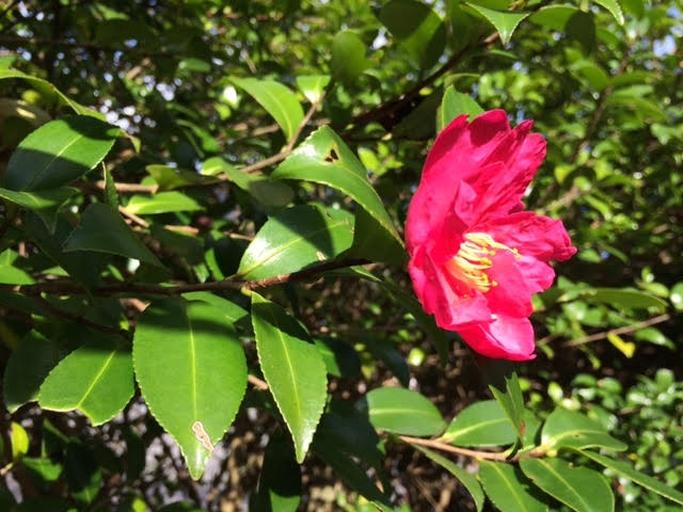 11月13日開催 はこじょ森林セラピー®ラボIN宮城野【マインドフルネス森林セラピー体験でこころ元気キレイ】イベントレポート