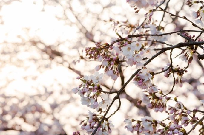 やる気が出ない……。気分が落ち込みやすい春に気をつけたいこと