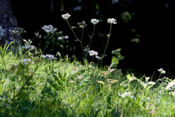 早春におすすめ。身体を目覚めさせる山菜の効果について