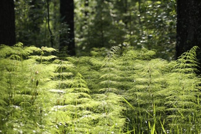 森林セラピーが適しているとき~コンディションを整え、マインドフルネス効果を~