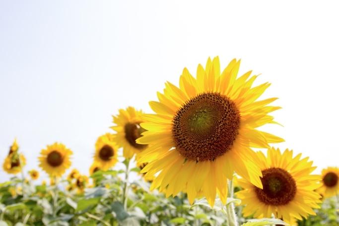 オレンジを食べると日焼けしやすくなる?焼けない肌を作る効果的な対策方法とは。