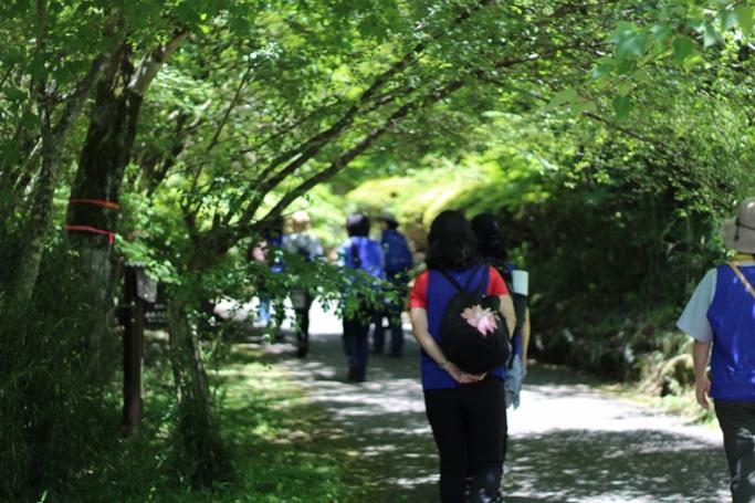 【森林セラピーレポート】「箱根芦ノ湖森林セラピー®️基地」森の癒し効果と森林セラピープログラム