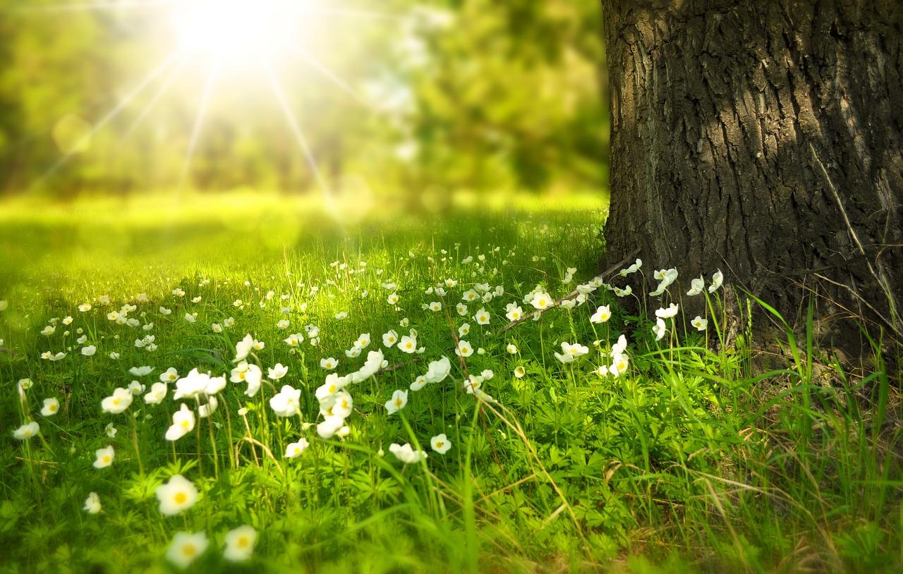 冬季うつと太陽のエネルギー〜寒さが増すこの時期、気をつけたいこと〜