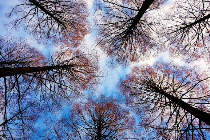 五感を用いた森林の楽しみ方<冬編>
