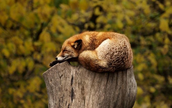 しっかり疲れをオフ!正しい休養の取り方