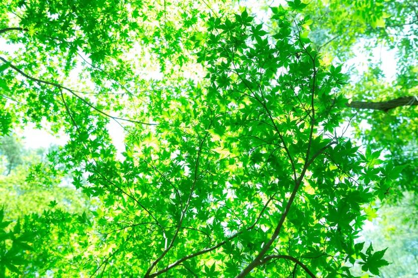 失恋の痛みには森林が効く。こころを癒す森林浴のすすめ