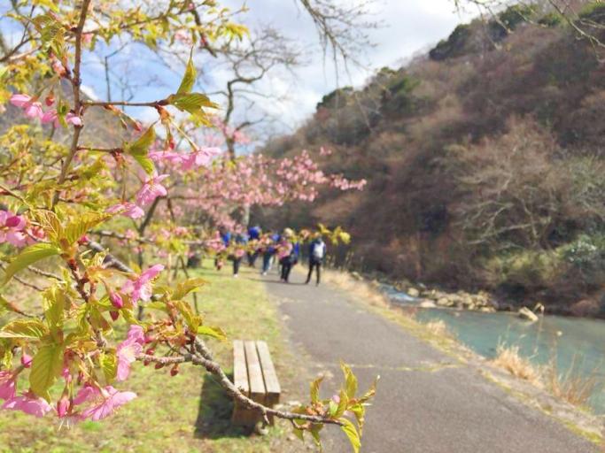 箱根町宮城野 マインドフルネス森林セラピー レポート