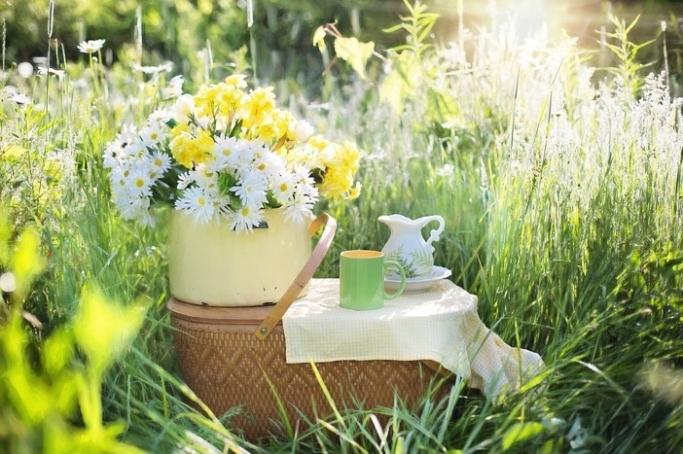 全身で春を感じる~ピクニックのすすめ~