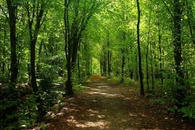 森の中でのお互いに認め合う体験〜森の中のコンプる〜