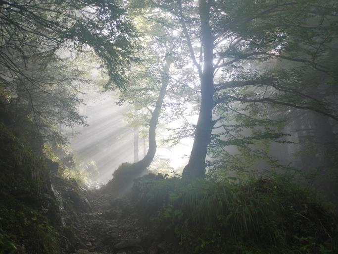 夏の森はフィトンチッドの濃度が高い