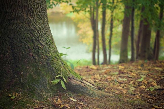 話すことが癒しに変わるとき〜森は自己開示を促す〜