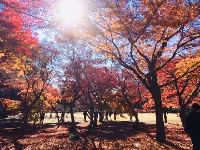 五感を用いた森林の楽しみ方(秋編)