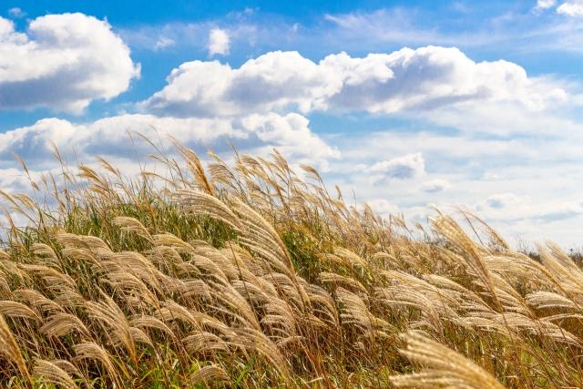 季節の変わり目の養生ポイント「初秋の過ごし方のススメ」