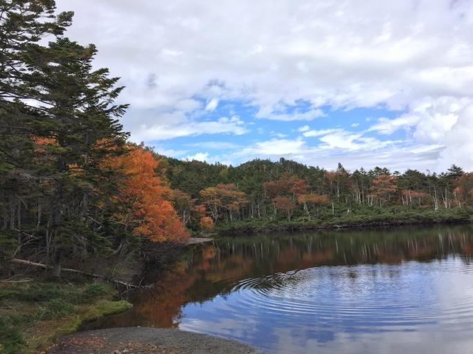 健康づくりにおける身体活動基準と森林浴