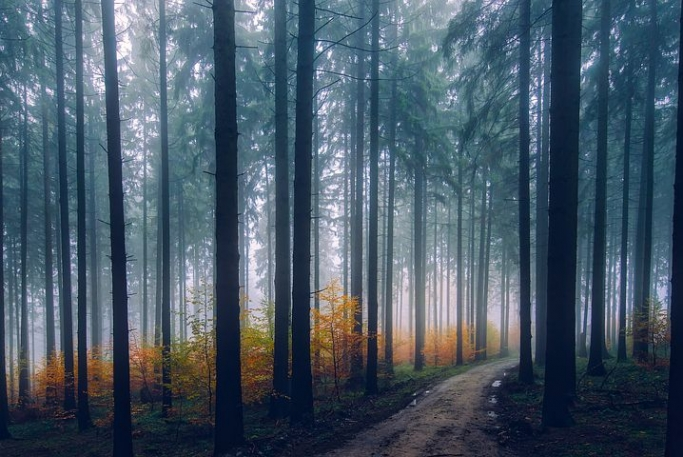 グランディングの意味と森林浴との関係