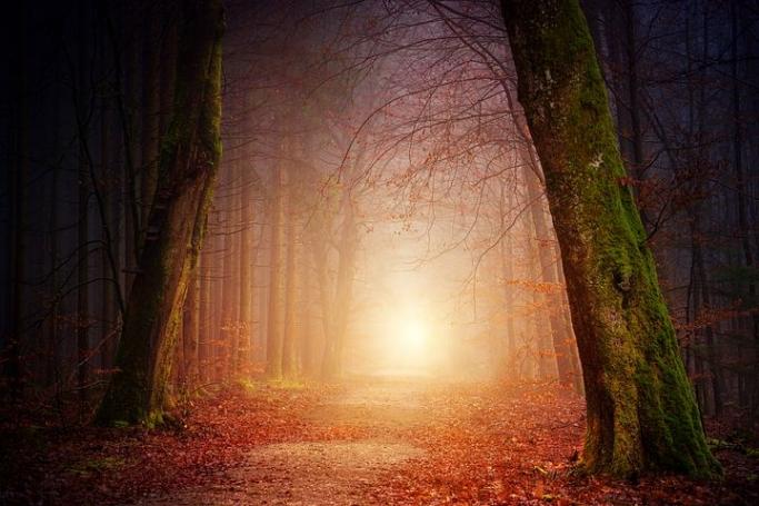 つらい別れの悲しみの乗り越え方 〜森は傷ついた心にもやさしい〜
