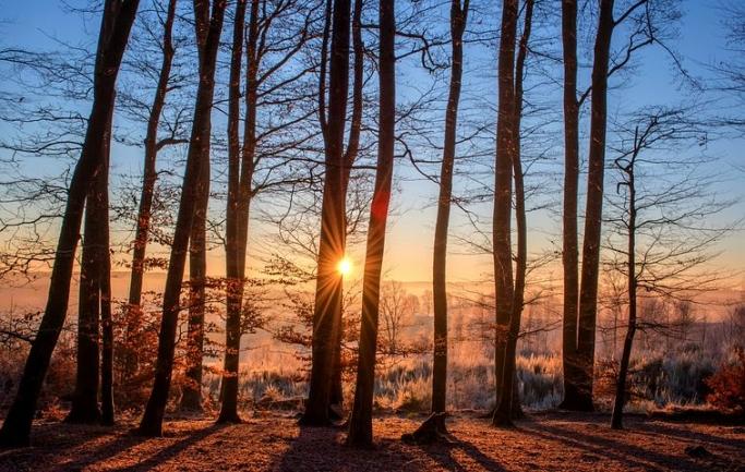 木の魅力 〜木材のアメニティ、職人の木の作品、木工作業の面白さ〜