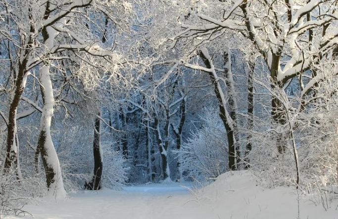 東洋医学と自然の繋がり~冬の養生ポイント~