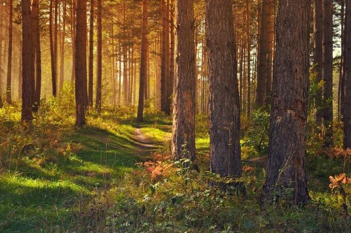 ラーニングピラミッドの理論から考える森林浴の効果と癒し