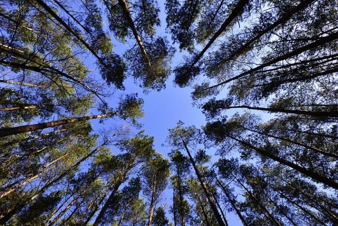 森で脳を休め、回復させる 〜環境心理学の知見から〜