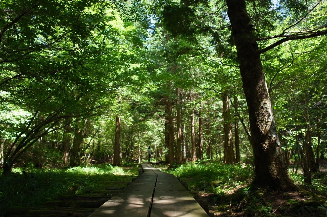森林浴からはじめよう、健康が近づくいきいき生活