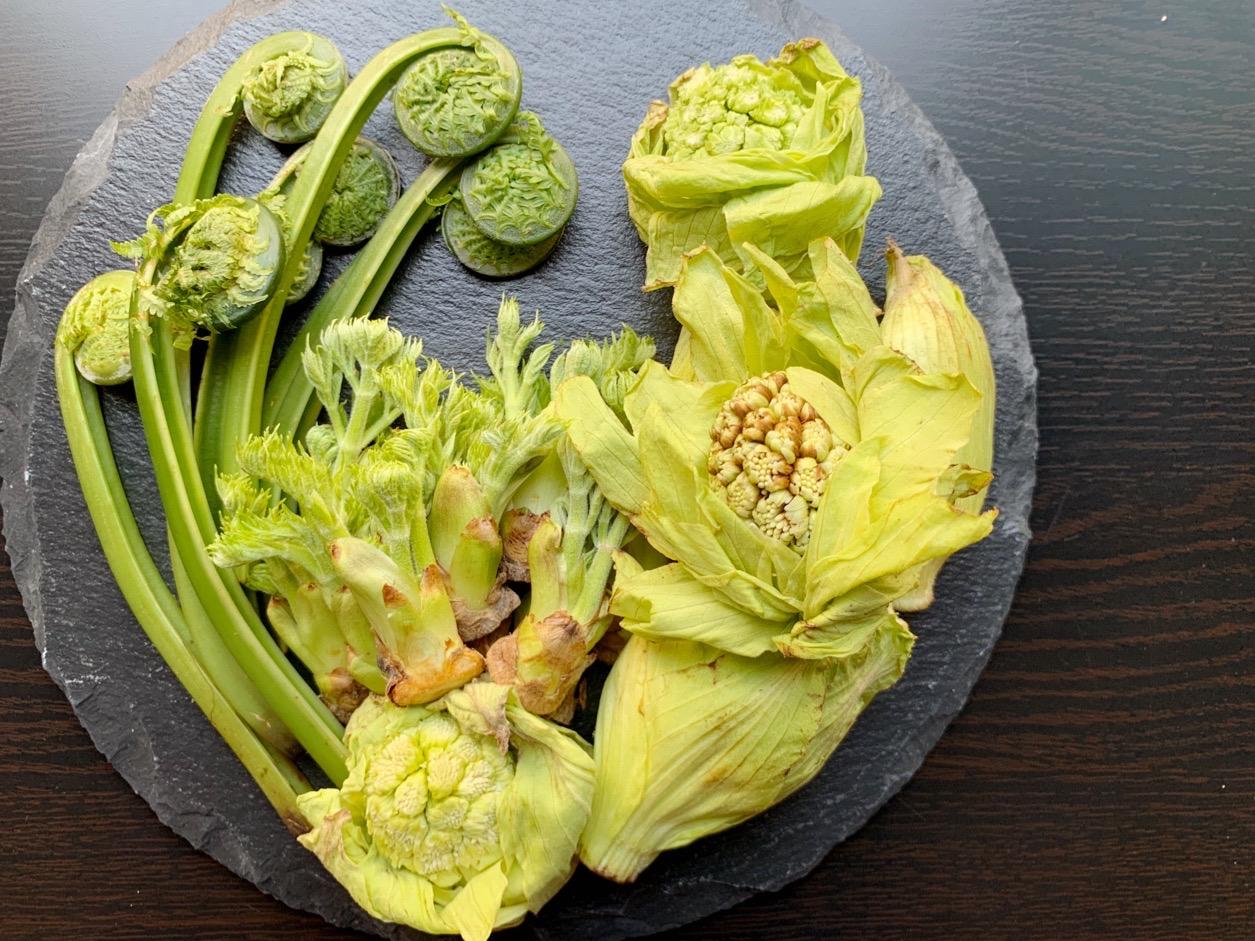 苦み=栄養素!身体を目覚めさせる旬の山菜