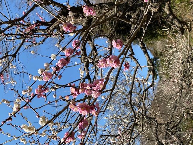 実録「身近な場所で樹木や草花を楽しんでみました」春編