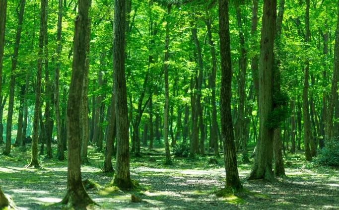 5月病予防に 〜新生活ならではのストレスは、森で休んで解消しよう〜