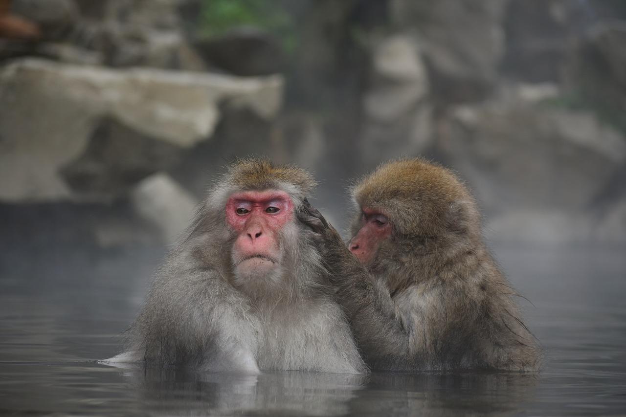 なぜ日本人は入浴と化粧水が好きなのか?~お湯の語源と化粧水の歴史~