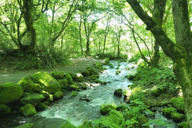 森は「緑のダム」